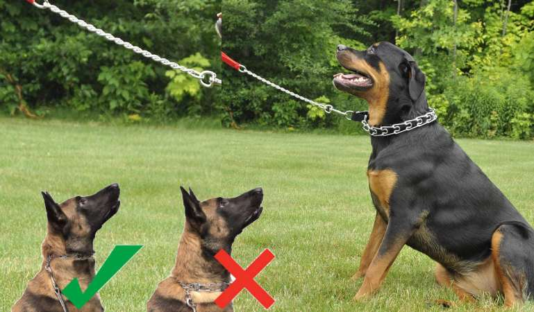 How Should You Place a Prong Collar on a Dog