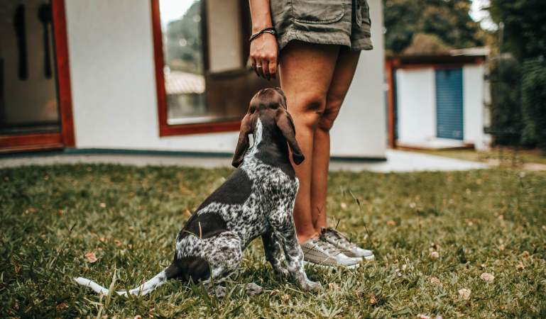 How to Stop Dog Barking When Left Alone