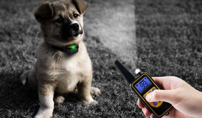 How to use a dog training collar