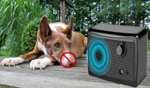Best Anti Bark Device for Dogs