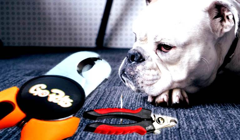 Best Dog Nail Clippers with Sensor