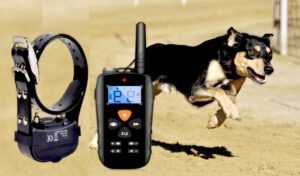 Best Training Collar for Stubborn Dogs