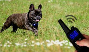 How to Train a Dog with Shock Collar