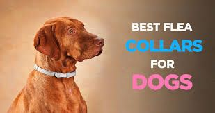The 11 Best Flea Collar For Dogs 2021 Reviews & Buyer's Guide 18