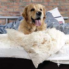 Why Do Dogs Dig In Their Beds