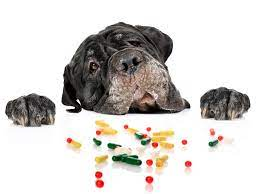 Over The Counter Medications That Are Safe for Dogs (And how much to give!)