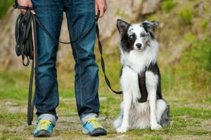 Everything you need to know about dog training collars in 2021